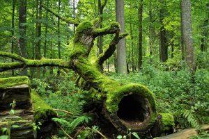 """""""Zanurzeni w lesie"""" – warsztaty silwoterapii"""